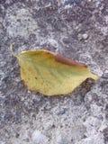 Un automne d'automne de feuille Image stock
