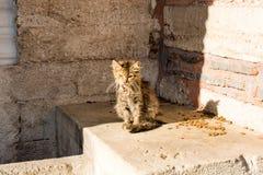 Un autre portrait d'un chat malheureux sans abri de rue Image stock