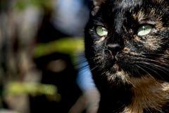 Un autre portrait d'un chat sans abri de rue Photo stock