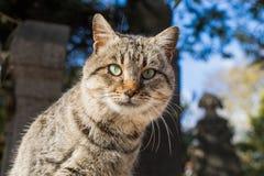 Un autre portrait d'un chat sans abri de rue Photos libres de droits