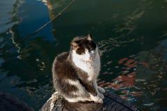 Un autre portrait d'un chat sans abri de rue Photographie stock libre de droits