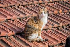 Un autre portrait d'un chat sans abri de rue Photo libre de droits