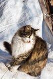 Un autre portrait d'un chat sans abri de rue Photos stock