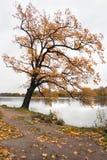 Un autumn-2 supplémentaire Image libre de droits