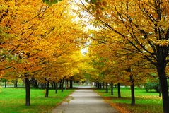 Un autunno del vicolo immagini stock