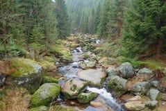 Un autunno in una bella foresta immagine stock libera da diritti