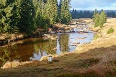 Un autunno in una bella foresta fotografia stock libera da diritti