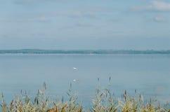Un ave zancuda blanca de la garza hern está volando sobre el lago Foto de archivo