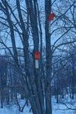 Un aviario di due rossi che appende nell'albero Immagine Stock