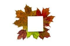 Un avorio bookdiary, nota con autumnfall lascia il bianco isolato Fotografie Stock