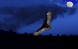 Avvoltoio di Turchia in nebbia blu. Fotografia Stock