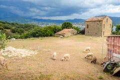 Un'azienda agricola con il pascolo della pecora che è tagliata di recente fotografia stock libera da diritti