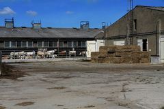 Un'azienda agricola con le mucche immagine stock libera da diritti
