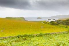 Un'azienda agricola tipica con allevamento di pecore nell'isola di Skye Immagini Stock