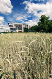 Architecture postmoderne derrière le champ de blé Photographie stock