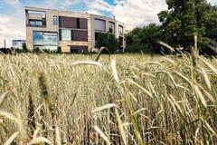 Architecture postmoderne derrière le champ de blé Photographie stock libre de droits