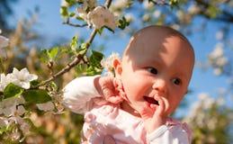 Un bébé parmi la fleur de pomme Images stock