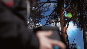 Un bûcheron coupant un arbre dans le premier plan dans le defocus de la main masculine du pilote de bourdon banque de vidéos