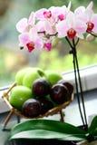 Un bac d'orchidée de mite images libres de droits