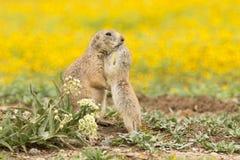 Un bacio di amore Immagine Stock