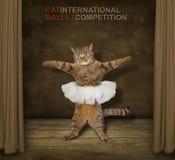 Un bailarín del gato en una etapa del teatro imágenes de archivo libres de regalías