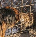 Un baiser, chats et chiens dans l'amour ; Pologne Photo libre de droits