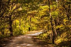 Un baldacchino di belle foglie, ornante un Raod ha viaggiato bene fotografia stock