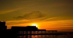 Un ballo di tramonto - storni Fotografia Stock