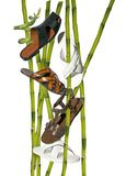 Un bambù Fotografia Stock
