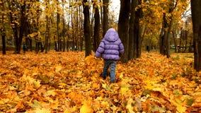 Un bambino cammina nel parco di autunno archivi video