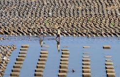 Un bambino che gioca acqua nell'acqua Colo Nguter Sukoharjo della diga della diga Immagine Stock Libera da Diritti