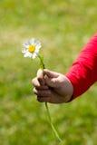 Un bambino che tiene una margherita in sua mano Fotografia Stock