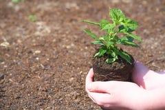 Un bambino con la piccola pianta verde immagine stock libera da diritti