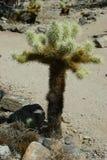 Un bambino prendente il sole Joshua Tree Immagine Stock Libera da Diritti