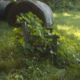 Un banc envahi par la verdure photographie stock libre de droits