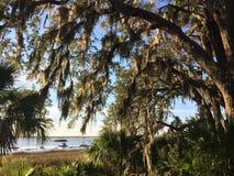 Un banc jette un coup d'oeil par les chênes et les paumes à la rivière photos stock