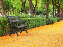 Un banc pittoresque en parc versé avec les arbres tombés d'acacia, Séville, Espagne Photos stock