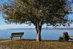 Un banc sous un arbre au-dessus de regarder la mer un point de vue en parc image stock