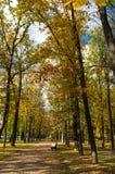 Un banc sur l'allée entre les arbres Photographie stock libre de droits