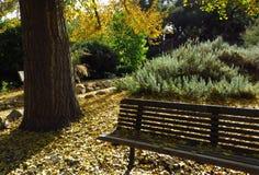 Un banch sur les feuilles jaunes Photos stock