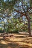 Un banco con una tavola per il rilassamento nella tonalità degli alberi Fotografie Stock