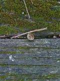 Un banco de madera cubierto con el musgo Imagen de archivo
