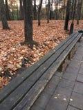Un banco de madera en un parque del otoño Fotografía de archivo