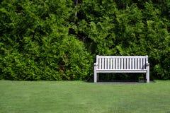 Un banco de madera vacío en la derecha de un campo verde con un fondo del arbusto grande verde y espacio a la izquierda de ser co Fotos de archivo