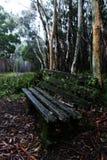 Un banco di parco solo nella foresta pluviale fradicia dell'eucalyptus Immagini Stock Libere da Diritti