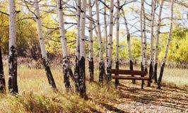 Un banco di parco sotto gli alberi della tremula nella caduta Fotografia Stock