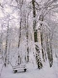 Un banco en el bosque cubierto con la nieve fotografiada por la tarde Paisaje hermoso del invierno de Noruega imagenes de archivo