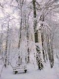 Un banco nella foresta coperta di neve fotografata nella sera Bello paesaggio di inverno della Norvegia immagini stock