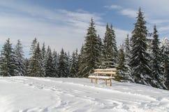 Un banco solo cerca del bosque Imagenes de archivo