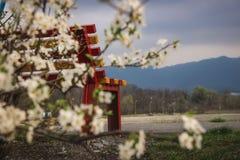 Un banco y un árbol floreciente imagenes de archivo